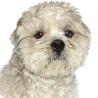 Adopt A Pet :: Piccachu - Oakland Park, FL
