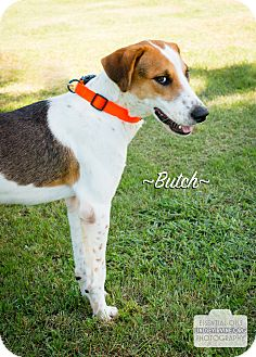 Hound (Unknown Type) Mix Dog for adoption in Leander, Texas - Butch