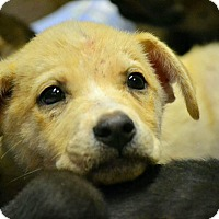 Adopt A Pet :: Chive - Boca Raton, FL