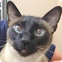 Adopt A Pet :: Tobey - Davis, CA