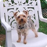 Adopt A Pet :: Izzy-adoption pending - Mississauga, ON