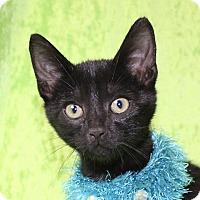 Adopt A Pet :: Rover - Jackson, MI