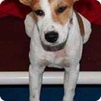 Adopt A Pet :: Benny - Bernardston, MA