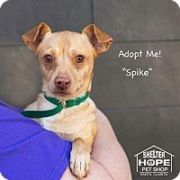 Adopt A Pet :: Spike - Valencia, CA