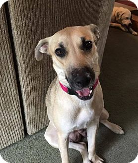 Black Mouth Cur Mix Dog for adoption in Jacksonville, Florida - Leia