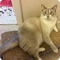 Adopt A Pet :: Llama Mama - Wyandotte, MI