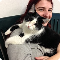 Adopt A Pet :: Davy - Hendersonville, NC