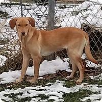 Adopt A Pet :: ZuZu - Sheridan, IL
