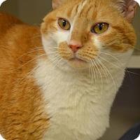 Adopt A Pet :: *Pudge* - Philadelphia, PA