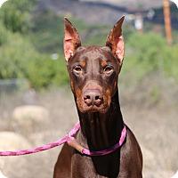 Adopt A Pet :: Marcel - Fillmore, CA