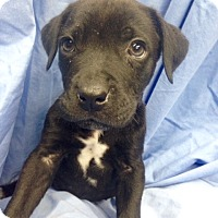 Adopt A Pet :: Tripp - Bridgewater, NJ