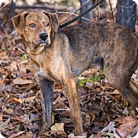 Adopt A Pet :: Archer - Clarkesville, GA