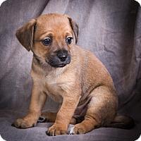 Adopt A Pet :: DAHLIA - Anna, IL
