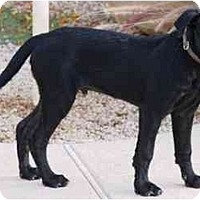 Adopt A Pet :: Carter - Gilbert, AZ