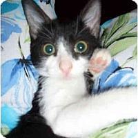 Adopt A Pet :: Sabrina - Boca Raton, FL
