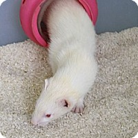 Adopt A Pet :: Casper - Indianapolis, IN