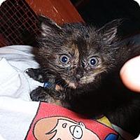 Adopt A Pet :: Candice - East Brunswick, NJ