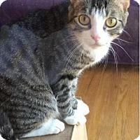 Adopt A Pet :: Bedsky - Brooklyn, NY