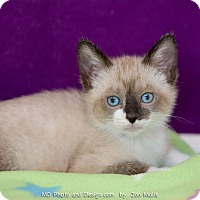 Adopt A Pet :: Ming - Fountain Hills, AZ