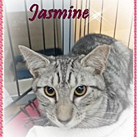 Adopt A Pet :: Jasmine - Orange City, FL