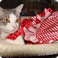 Adopt A Pet :: Harper - Homewood, AL