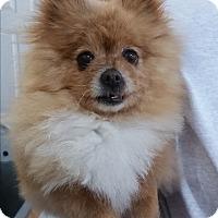 Adopt A Pet :: Rosie - Salem, OR
