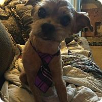 Adopt A Pet :: Prince - Georgetown, KY
