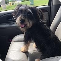 Adopt A Pet :: Bernie - Omaha, NE