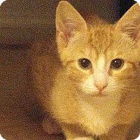 Adopt A Pet :: Michael Jackson - Addison, IL