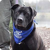 Adopt A Pet :: Archer - Grand Rapids, MI