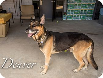 German Shepherd Dog Mix Dog for adoption in Phoenix, Arizona - Denver
