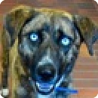 Adopt A Pet :: Marilyn - Des Moines, IA