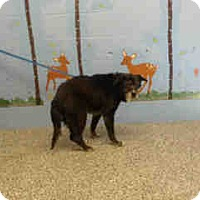 Adopt A Pet :: URGENT ON 10/14 San Bernardino - San Bernardino, CA