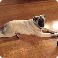 Adopt A Pet :: Zoe - Bedford Hills, NY