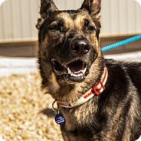 Adopt A Pet :: Pheonix - Phoenix, AZ