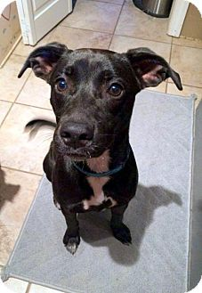 Feist Mix Dog for adoption in White Bluff, Tennessee - Toni/shelby