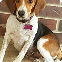 Adopt A Pet :: Janie - Mansfield, TX