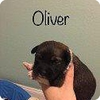 Adopt A Pet :: OLIVER (BISCUIT PUPPY) - Hampton, VA