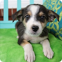 Adopt A Pet :: Callen - Allentown, VA