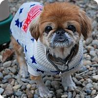 Adopt A Pet :: Ginger - Berea, OH