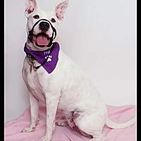 Adopt A Pet :: Karma - Yamhill, OR