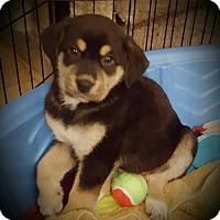 Adopt A Pet :: Ben - LITTLETON, CO