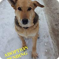 Adopt A Pet :: HUDSIN - Winnipeg, MB