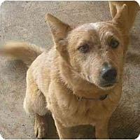 Adopt A Pet :: Hemi - Phoenix, AZ