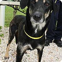 Adopt A Pet :: Margo - Bardonia, NY