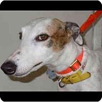 Adopt A Pet :: Mona - N. BABYLON, NY