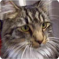 Adopt A Pet :: Aslan - Annapolis, MD