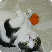 Adopt A Pet :: Monica - Chesapeake, VA