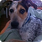 Adopt A Pet :: Kate Mara