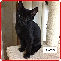 Adopt A Pet :: Turbo - Miami, FL